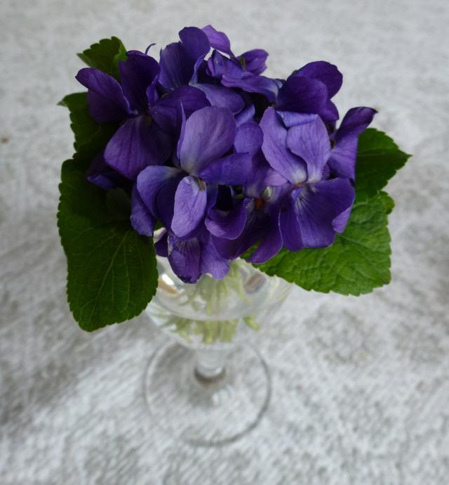 Blomster fra gæster - HANNES blog
