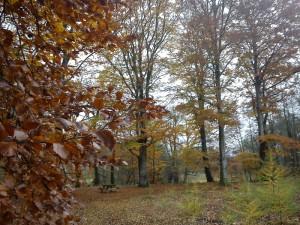 HANNES-blog - efterårs billeder