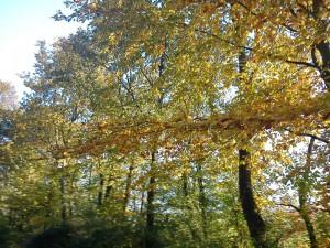 HANNES efterårstur i skoven