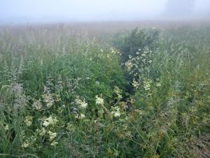 HANNES blog - meget diset morgentur - andre blomster