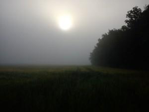 HANNES blog - meget diset morgentur -solen