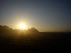 Hannes morgen tur i Vejerslev en diset morgenstund 5- HANNES blog