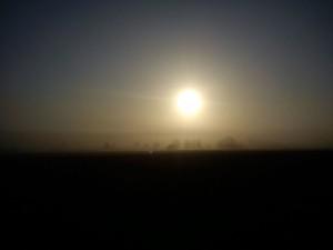 Hannes morgen tur i Vejerslev en diset morgenstund 3- HANNES blog