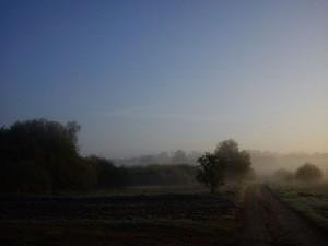 Hannes morgen tur i Vejerslev en diset morgenstund 2- HANNES blog