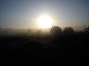 Hannes morgen tur i Vejerslev en diset morgenstund 1- HANNES blog