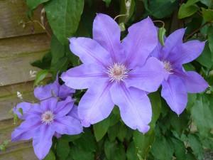 hannes blog - lilla flotte blomster
