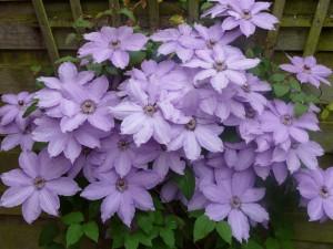 hannes blog - flotte blomster