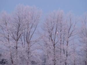 Natur billeder fra Vejerslev