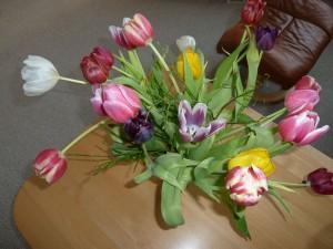 Hannes blog - flotte tulipaner