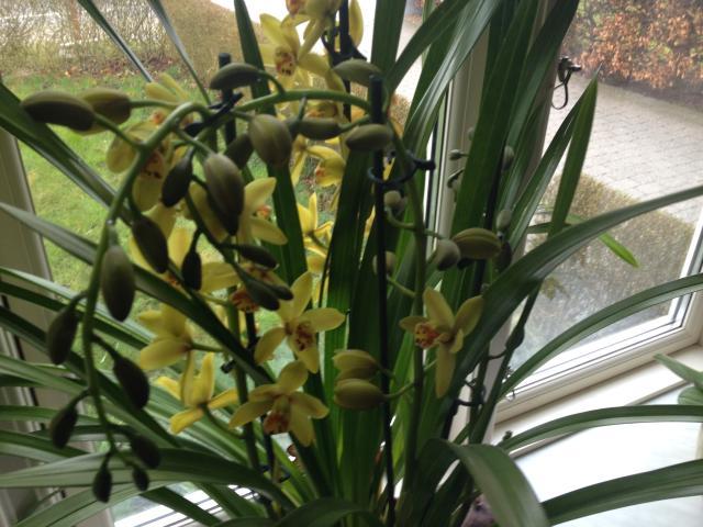 orchide2