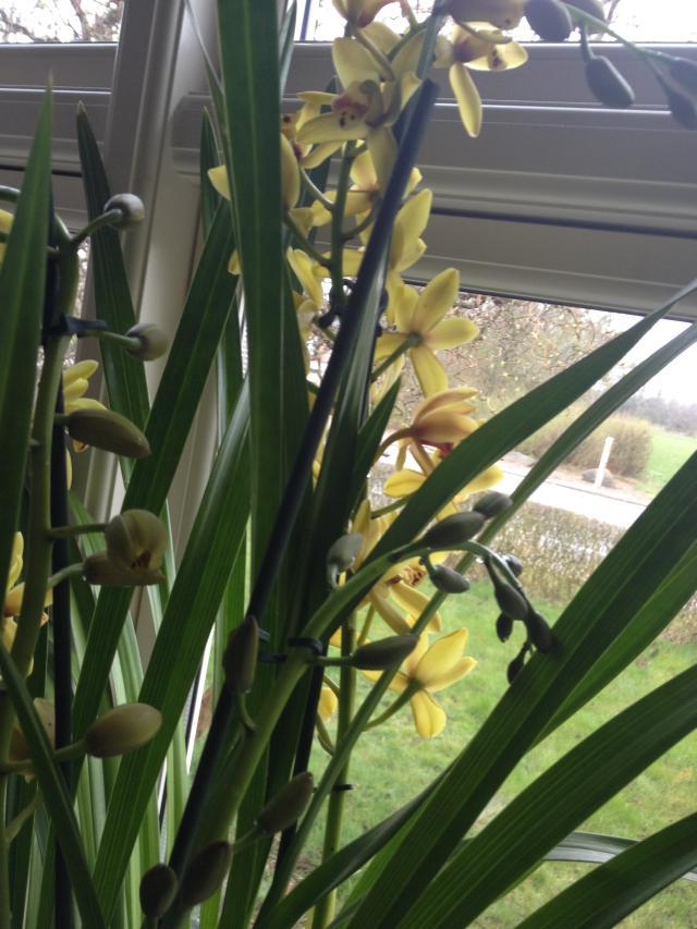 orchide3
