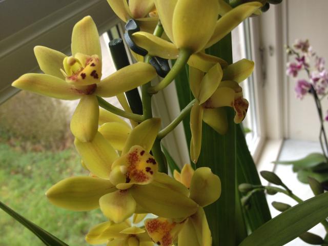 orchide5
