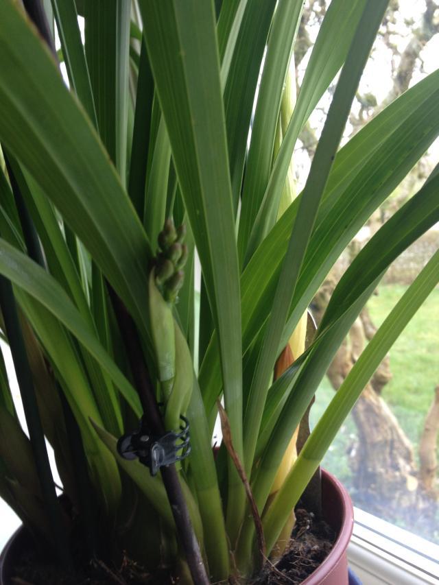 orchideorchide6