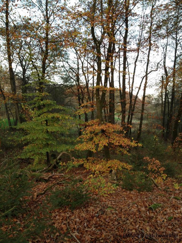 skoven0110-1