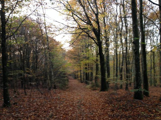 skoven0110