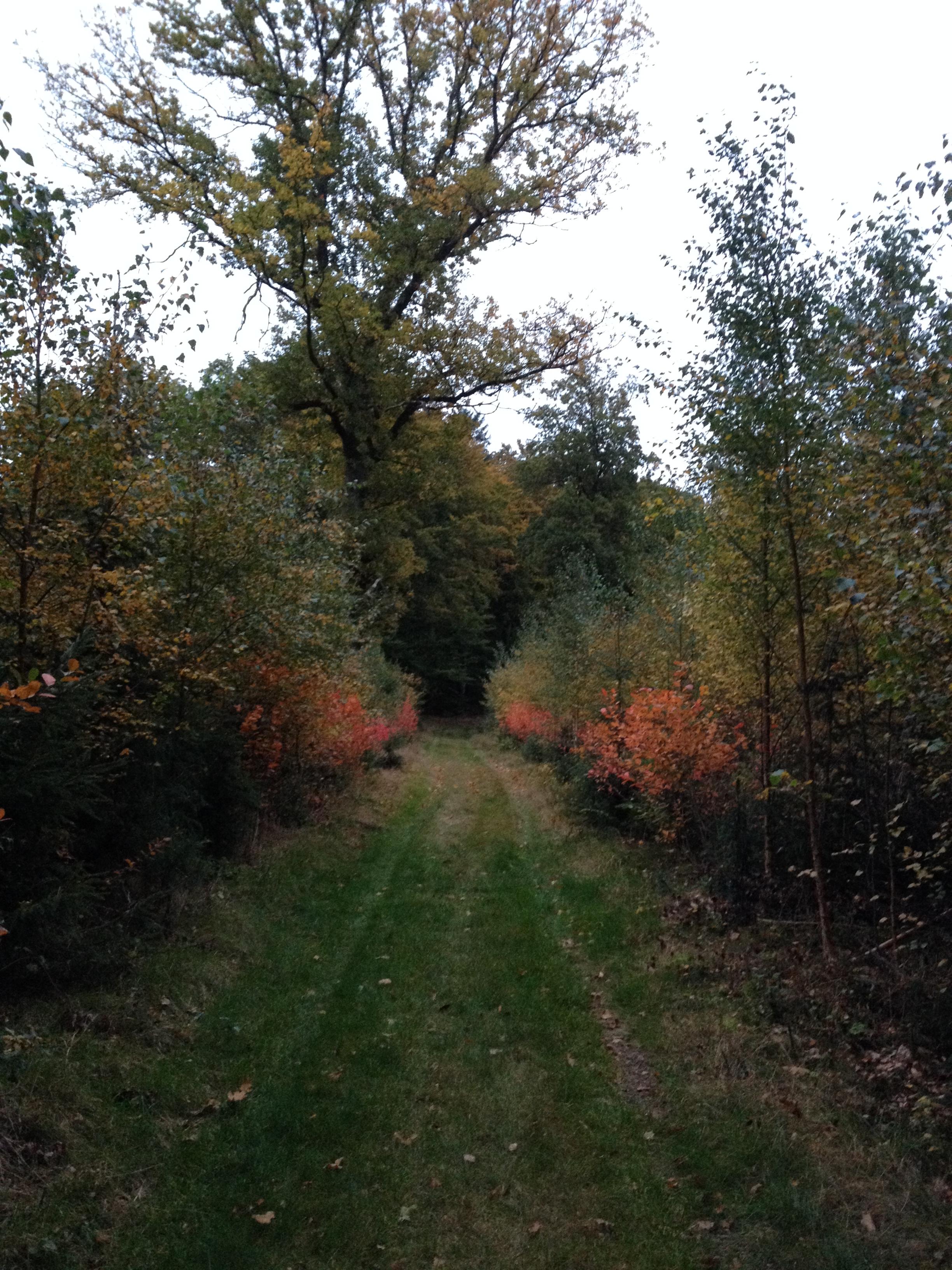 skoven0910 012